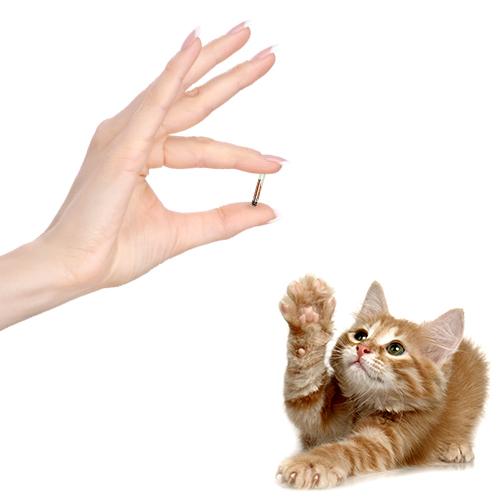 Datamars Pet ID - How use microchips?